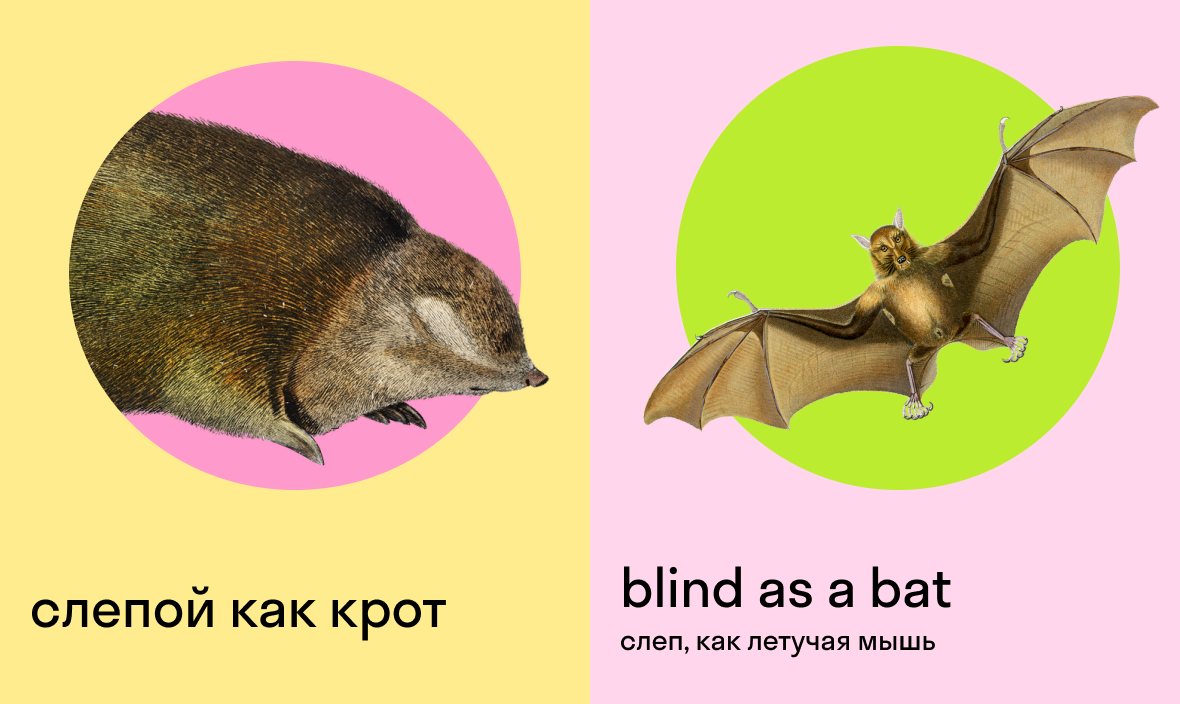 слепой как крот по английски — blind as a bat — слепой как летучая мышь